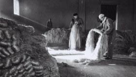 hemp-fibers